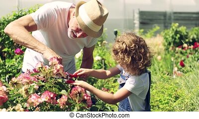 meisje, tuinieren, achterplaats, senior, grootvader,...