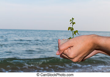 meisje, vasthouden, boom planten, hand, nieuw