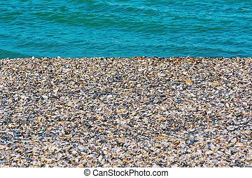 mejillones, orilla, conchas