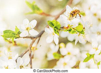 mel, primavera, abelha, scenes.