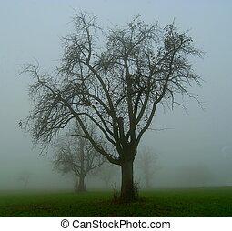 mela, albero, in, il, nebbia