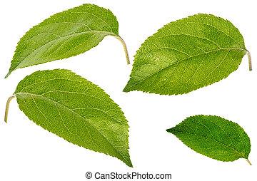 mela, bianco, isolato, foglie, set
