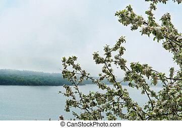 mela, sopra, lago, albero, nebbia, azzurramento, nebbia, fioritura