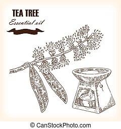 Melaleuca. Hand drawn TeaTree essential oil. Vector illustration