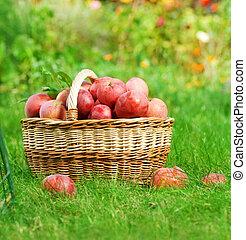 mele fresche, cesto, organico