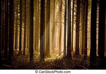 meleg, napsugarak, át, egy, erdő