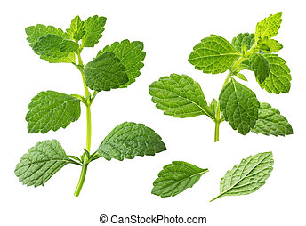 Melissa collection, lemon balm leaves isolated on white background