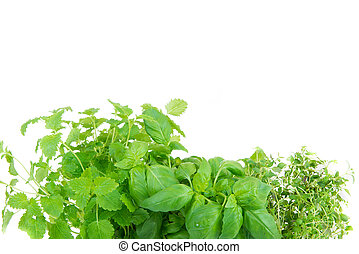melissa, thyme and basil on white background