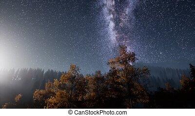 melkweg, sterretjes, met, maanlicht, boven, pijnboom bomen,...