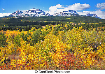 Mellow autumn. The trees with yellow and red foliage -...