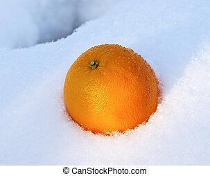 Mellow orange in white fresh snow in winter