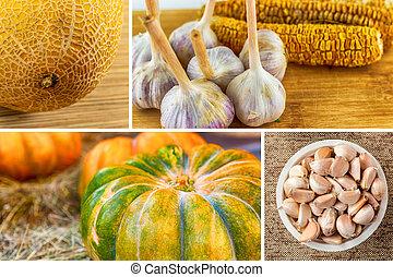 melon and pumpkin collage vegetable garlic with corn, garlic autumn design vintage
