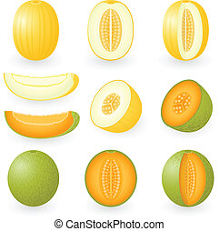 Melon - Vector illustration of melons
