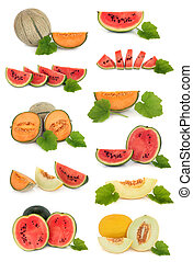Fruit collection of watermelon, galia, cantaloupe and honeydew melon varieties with leaf sprigs isolated over white background.