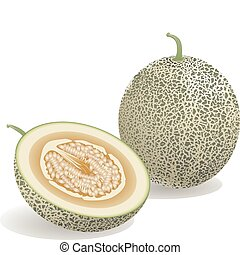 Melon Fruit - Realistic vector illustration of a melon and a...