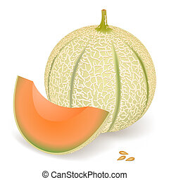 Melon - A delicious melon, vector illustration