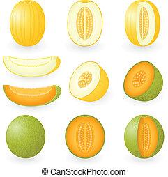 Melon - Vector illustration of melons