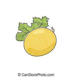 melone, bianco, isolato