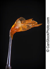Melted cannabis oil concentrate aka shatter held on a dabbing tool