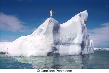 Melting iceberg - King penguin on melting iceberg Antactica