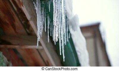 Melting icicles dripping. Hang from the roof and drain