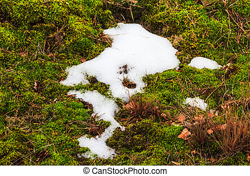 Melting snow midst grass