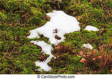 Melting snow midst grass