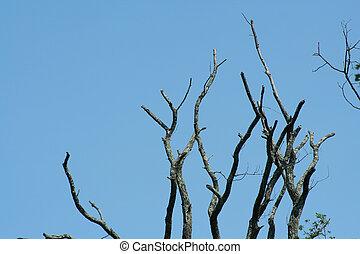 membres, arbre, mort