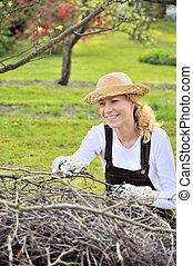 membres, femme, arbre, jeune, nettoyage