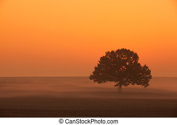 Memorable lonely tree in the morning mist