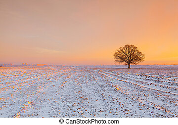 Memorable tree on the field in the frosty morning. Amazing winter landscape.