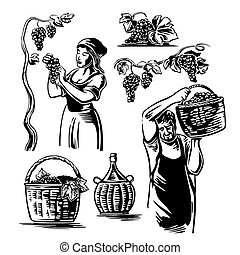 Men and women harvest the grapes in the vineyard. Black and...