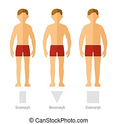 Men body types male body types diagram ectomorph skinny men body types ccuart Image collections