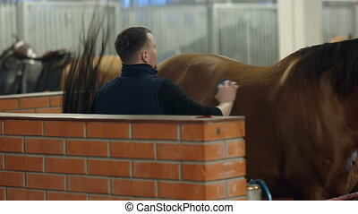 Men grooming brown horse hair. Grooming a horse. Close up....
