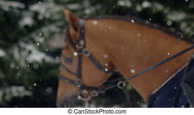 Men horseback riding a big brown horse in beautiful snowy...