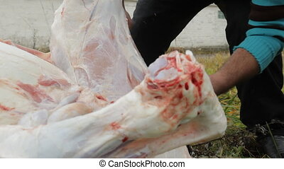 Men on the farm cut and dismantle the carcass of a young...