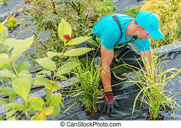 Men Planting New Plants and Flowers in His Garden