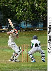 Men play Cricket in Victoria park Auckland, New Zealand -...