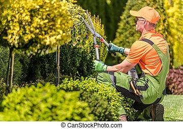 Men Shaping Garden Trees