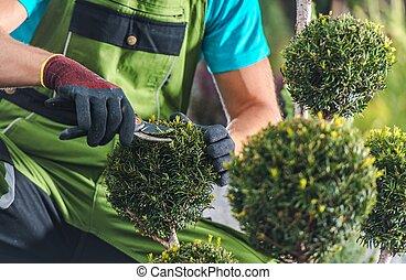 Men Trimming Garden Plants
