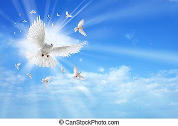 menedékhely élénk, galamb, repülés, alatt, a, ég