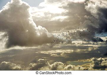 menge vögel, in, himmlisch, wolkenhimmel
