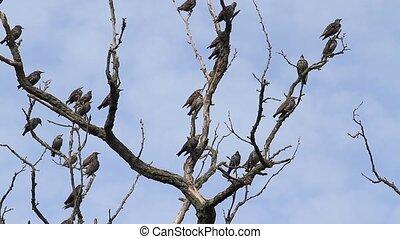 menge vögel, sitzen, zweig, und, dann, fliegt, weg