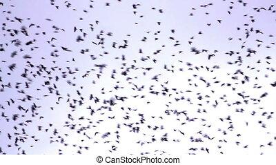 menge vögel