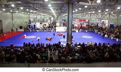 menigte, horlogehond, behendigheid, in, groot, tentoonstelling, hangaar