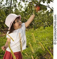 menina, colheita, maçã