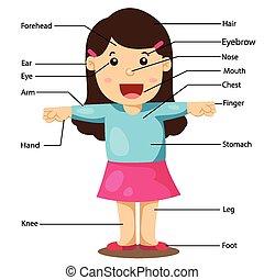 menina, ilustração