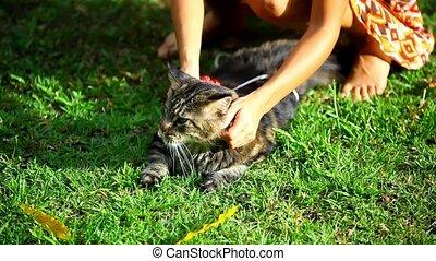menina, tocando, com, um, gato, em, natureza