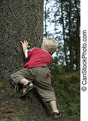 menino, atrás de, um, árvore
