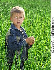 menino, capim, verde, jovem, campo